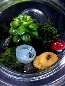TERARIU în borcan etanș. Cu mușchi, licheni, o plantă și câteva insecte (faună): Vaca domnului. Și un capac de PET în care sunt câteva semințe de tei (ca hrană)