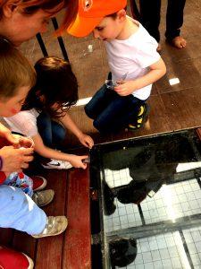 Dacă au învățat despre specii terestre, acum le învață și pe cele acvatice, modul de hrănire și experimentează ei înșiși cum / când / ce mănâncă un pește.