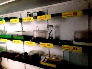EXPOZIȚIA mobilă cu TERARII: cu FLORĂ dar și cu exemplare de FAUNĂ: furnici (mini-colonie)/ melci/ limaxi/ greieri/ lăcuste/ insecte carnivore/ ocazional: amfibieni - reptile/mamifere/ păsări