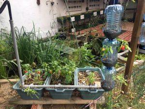 Sistem de AquaHidroPonic + plante în Vertical garden ..