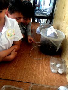 Se pare că traseele furnicilor pe niște tuburi transparente, către hrană și apă îi fascinează pe copiii...
