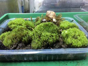 TERARIU cu mușchi și licheni și câțiva melci - amenajat într-o răsadniță (pentru plante)