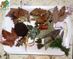 FRUNZE: stejar (6 specii), salcie, fag, arțar, lotus, mușchi, flori uscate