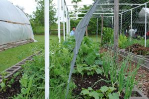 Aici plantele pot fi văzute / gustate/ mirosite în mediul lor...